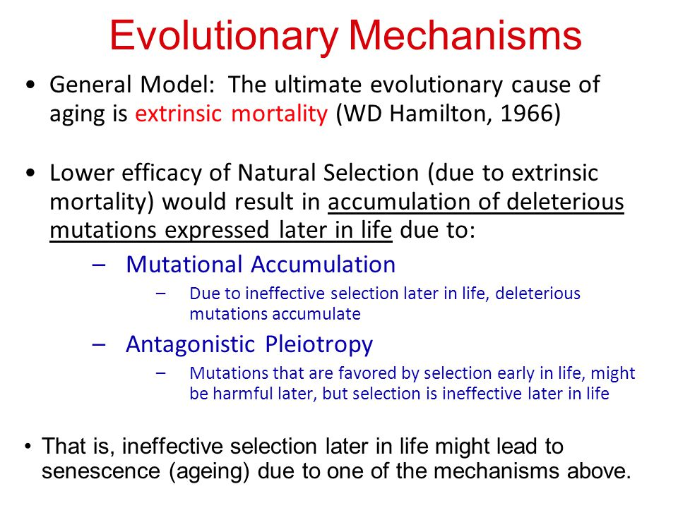 Evolutionary Mechanisms General Model: The ultimate evolutionary cause of aging is extrinsic mortality (WD Hamilton, 1966) Lower efficacy of Natural S