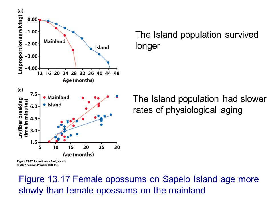 Figure 13.17 Female opossums on Sapelo Island age more slowly than female opossums on the mainland The Island population survived longer The Island po