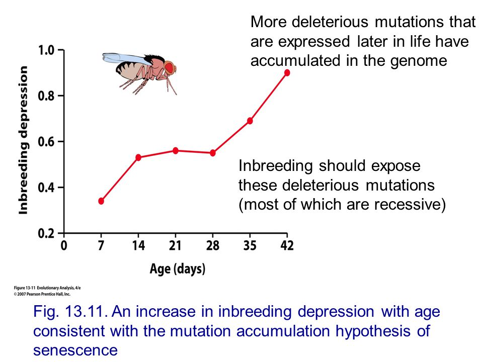 Fig. 13.11. An increase in inbreeding depression with age consistent with the mutation accumulation hypothesis of senescence Inbreeding should expose