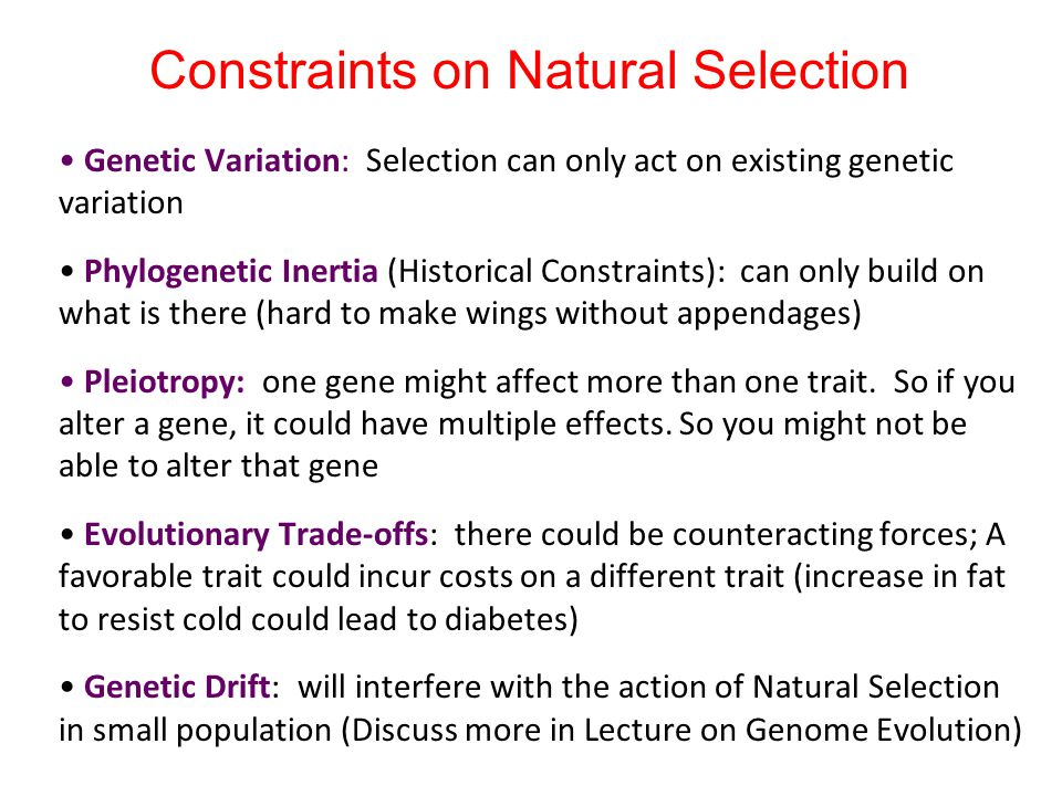 Constraints on Natural Selection Genetic Variation: Selection can only act on existing genetic variation Phylogenetic Inertia (Historical Constraints)