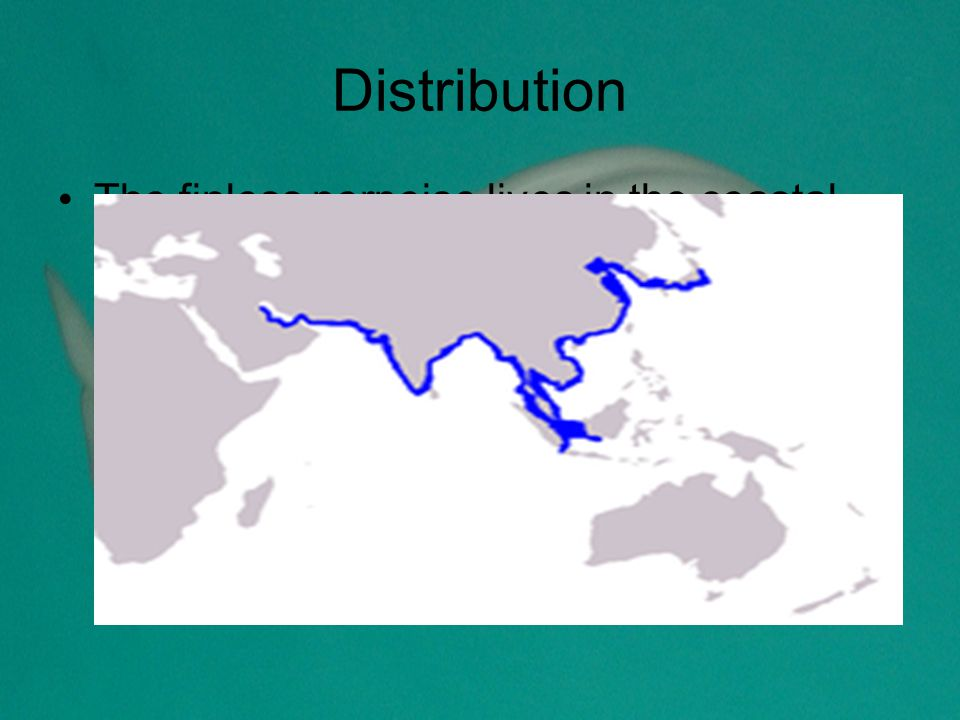 Distribution The finless porpoise lives in the coastal waters of Asia, especially around Korea, India, China, Indonesia, Bangladesh and Japan.