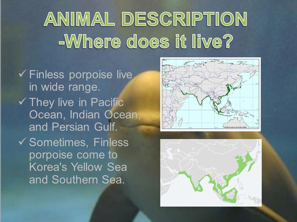 Finless porpoise live in wide range.They live in Pacific Ocean, Indian Ocean, and Persian Gulf.
