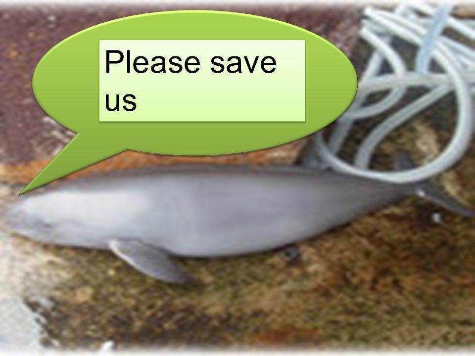 Please save us