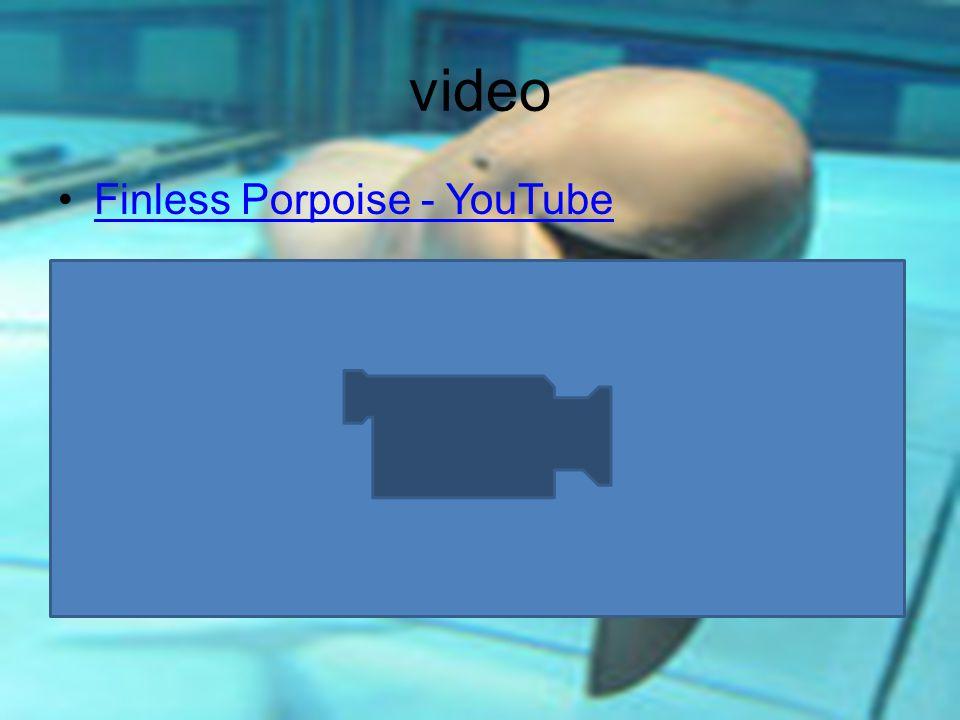 video Finless Porpoise - YouTube