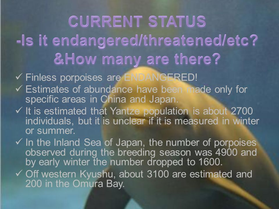 Finless porpoises are ENDANGERED! Estimates of abundance have been made only for specific areas in China and Japan. It is estimated that Yantze popula