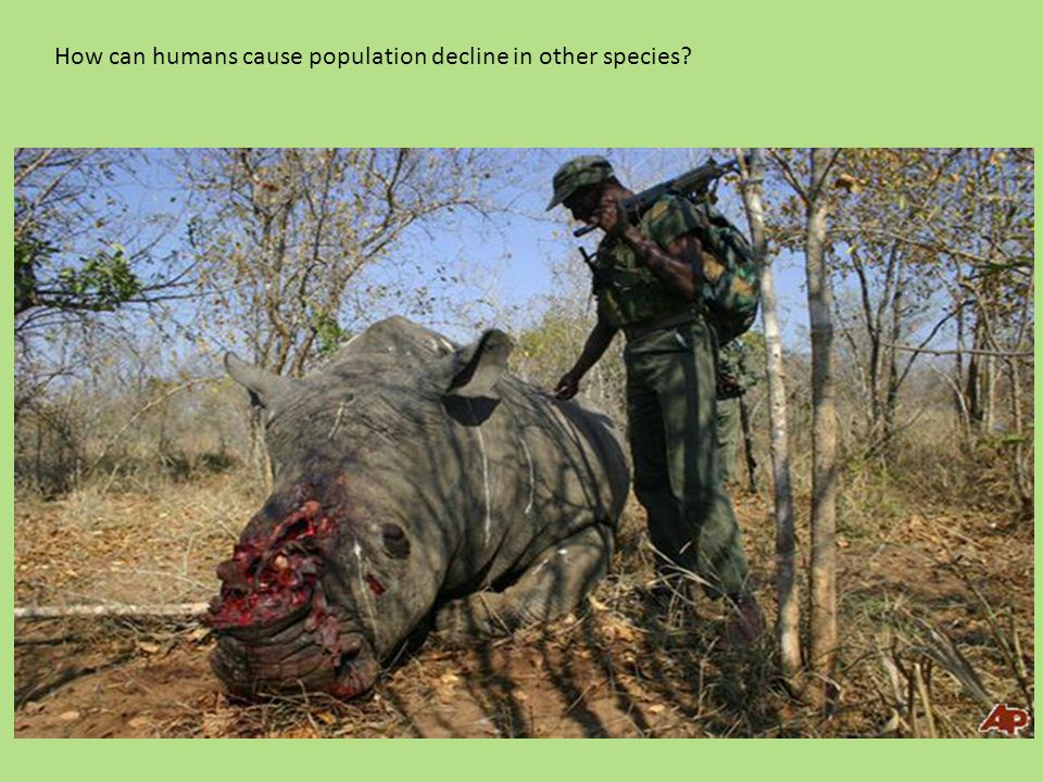 How can humans cause population decline in other species