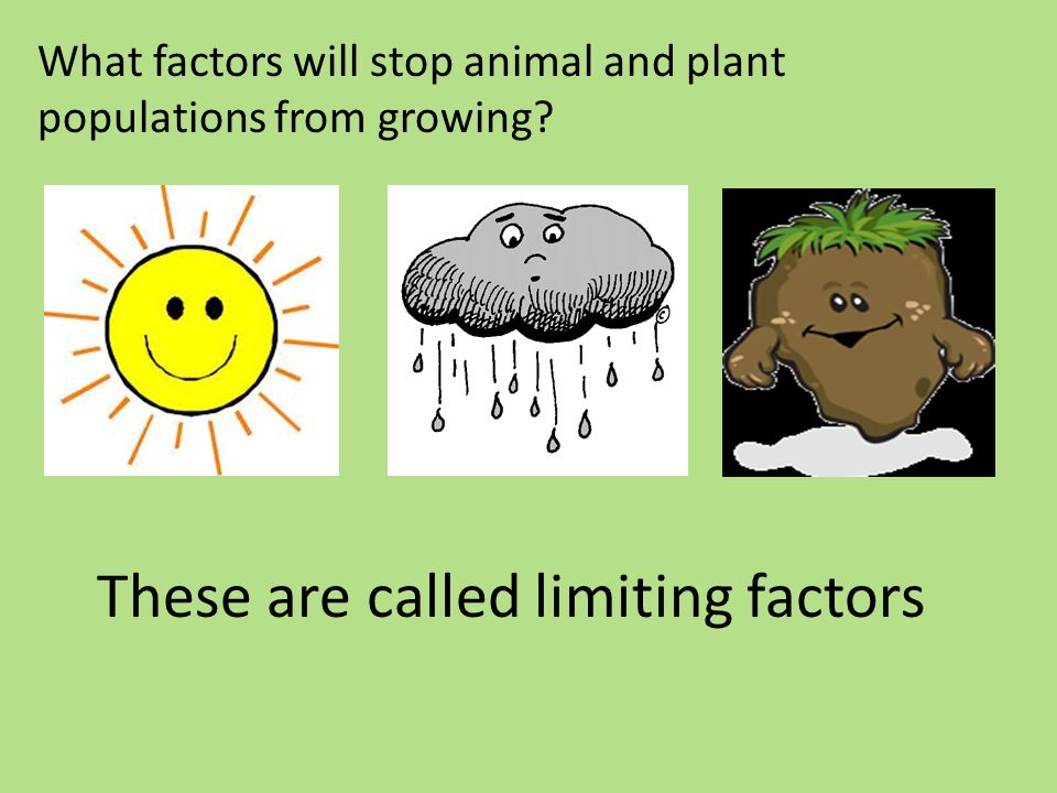 These are called limiting factors What factors will stop animal and plant populations from growing