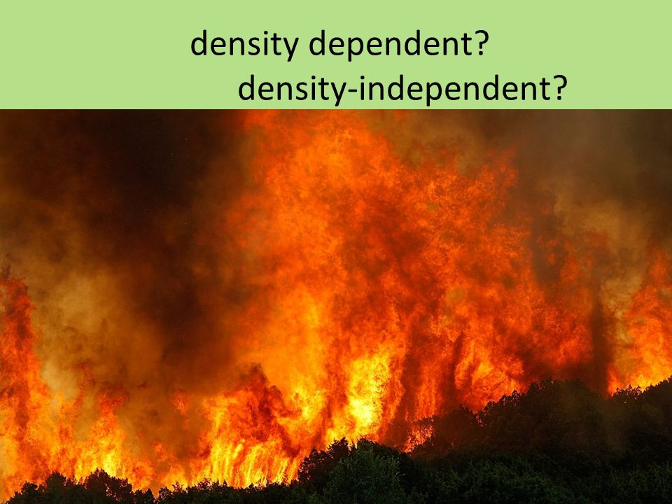 density dependent density-independent