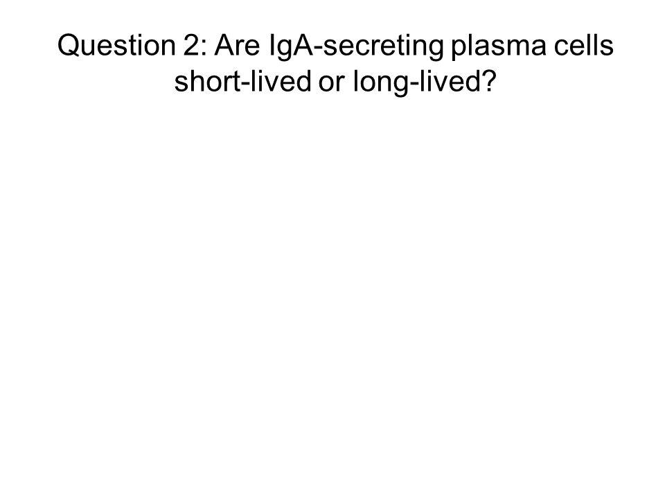 Question 2: Are IgA-secreting plasma cells short-lived or long-lived?