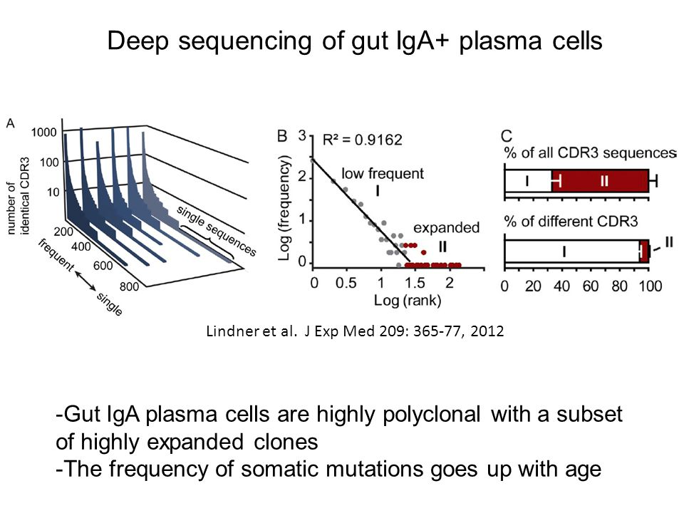 Deep sequencing of gut IgA+ plasma cells Lindner et al. J Exp Med 209: 365-77, 2012 -Gut IgA plasma cells are highly polyclonal with a subset of highl