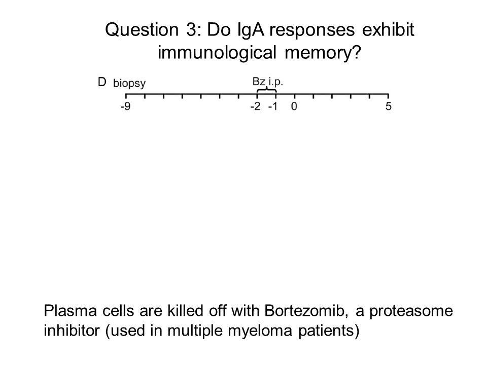Question 3: Do IgA responses exhibit immunological memory? Lindner et al. J Exp Med 209: 365-77, 2012 Plasma cells are killed off with Bortezomib, a p