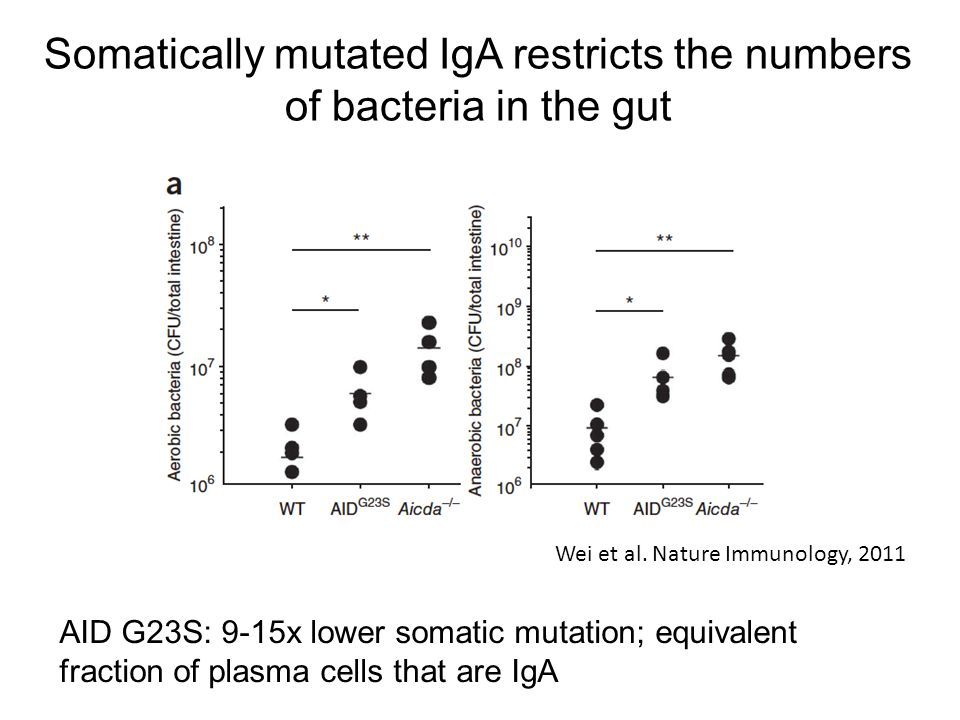 Somatically mutated IgA restricts the numbers of bacteria in the gut Wei et al. Nature Immunology, 2011 AID G23S: 9-15x lower somatic mutation; equiva