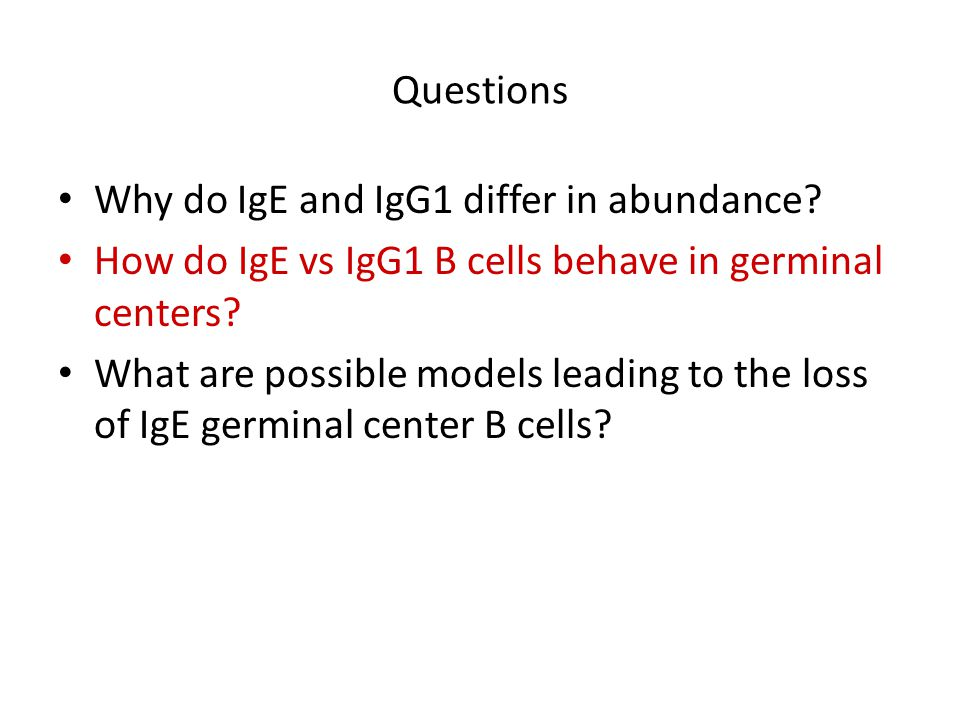 Questions Why do IgE and IgG1 differ in abundance? How do IgE vs IgG1 B cells behave in germinal centers? What are possible models leading to the loss