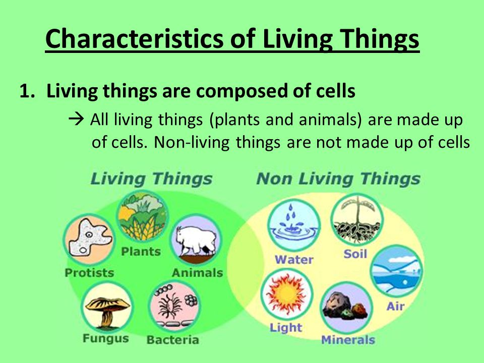 Characteristics of Living Things 1.Living things are composed of cells  All living things (plants and animals) are made up of cells.