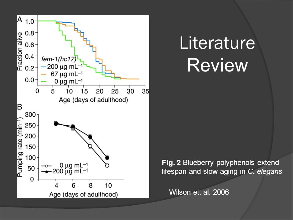 Fig. 2 Blueberry polyphenols extend lifespan and slow aging in C.