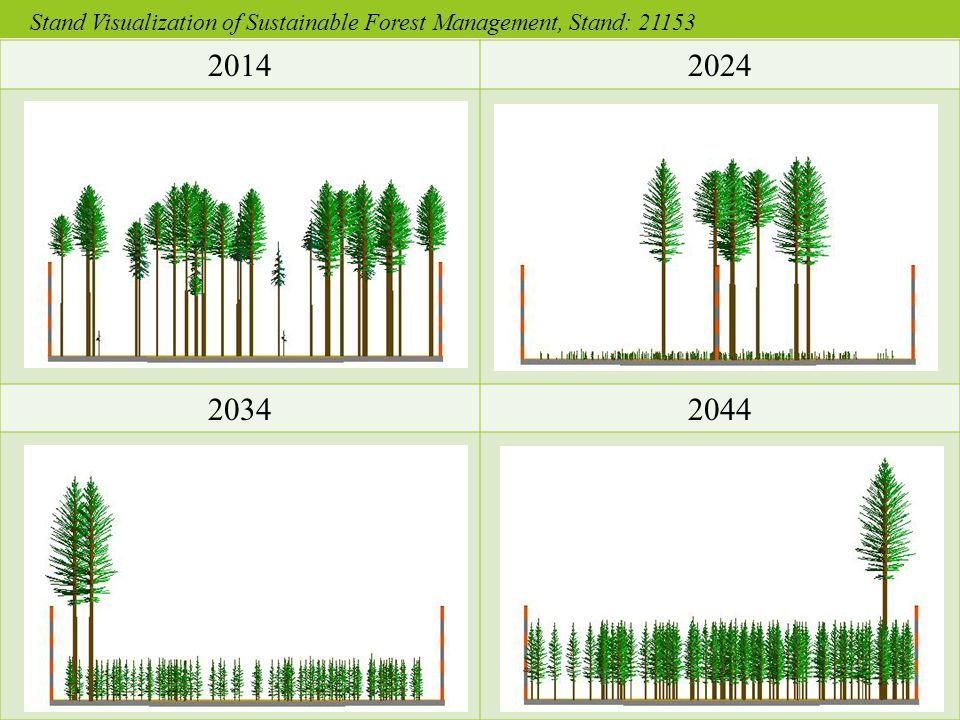 20142024 20342044 Stand Visualization of Sustainable Forest Management, Stand: 21153