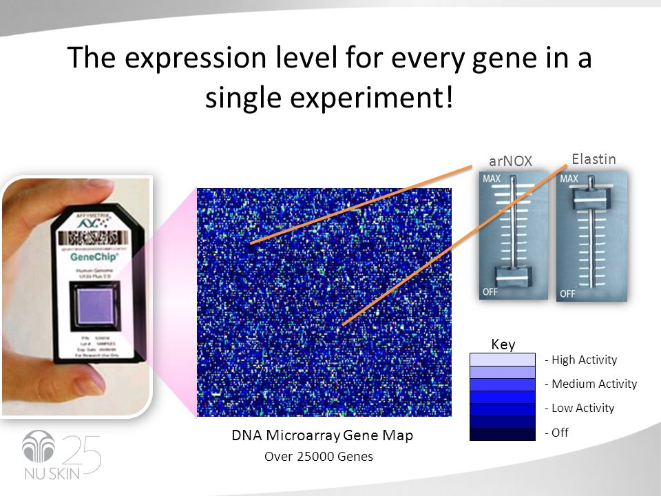 The expression level for every gene in a single experiment.