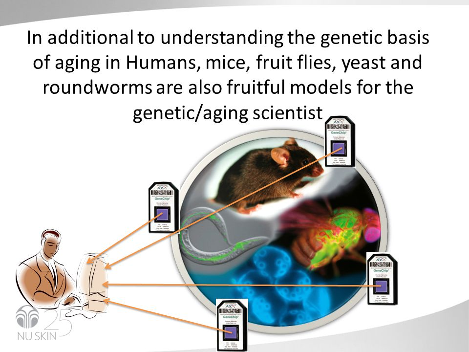 In additional to understanding the genetic basis of aging in Humans, mice, fruit flies, yeast and roundworms are also fruitful models for the genetic/aging scientist