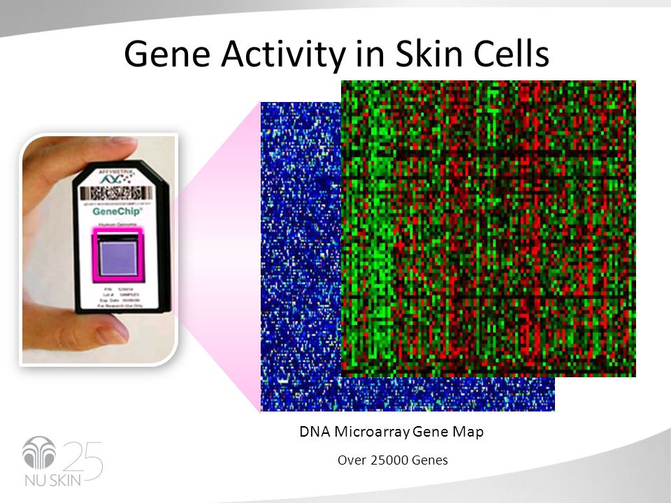 Gene Activity in Skin Cells DNA Microarray Gene Map Over 25000 Genes