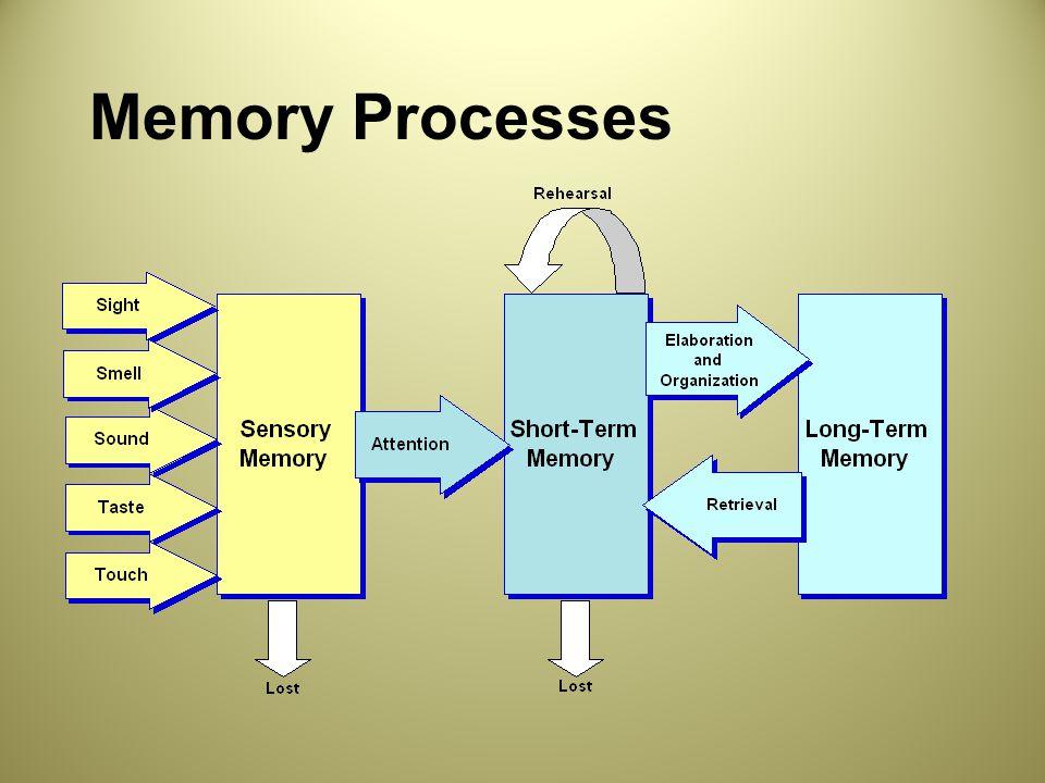 Memory Processes