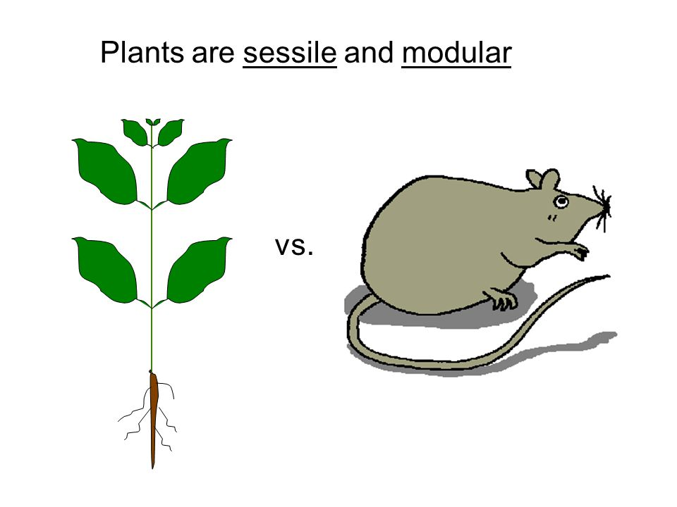 Plants are sessile and modular vs.