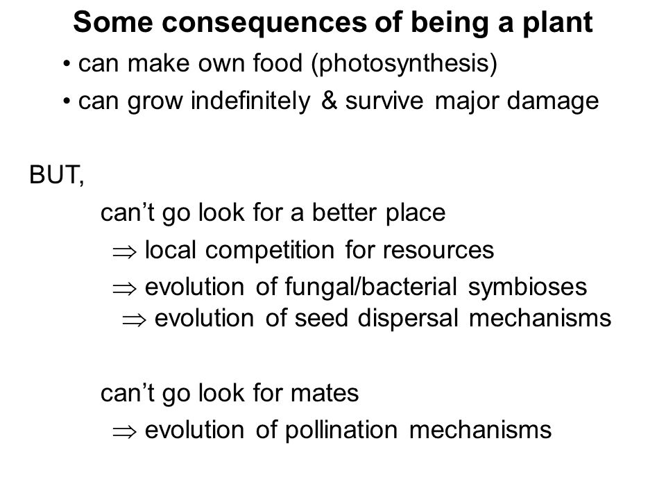 Some consequences of being a plant can make own food (photosynthesis) can grow indefinitely & survive major damage BUT, can't go look for a better pla