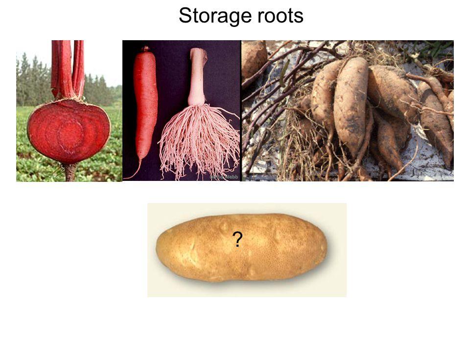 Storage roots ?