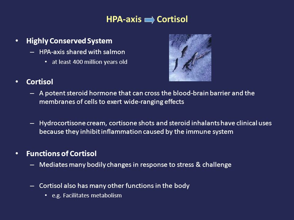 Highly Conserved System – HPA-axis shared with salmon at least 400 million years old Cortisol – A potent steroid hormone that can cross the blood-brain barrier and the membranes of cells to exert wide-ranging effects – Hydrocortisone cream, cortisone shots and steroid inhalants have clinical uses because they inhibit inflammation caused by the immune system Functions of Cortisol – Mediates many bodily changes in response to stress & challenge – Cortisol also has many other functions in the body e.g.