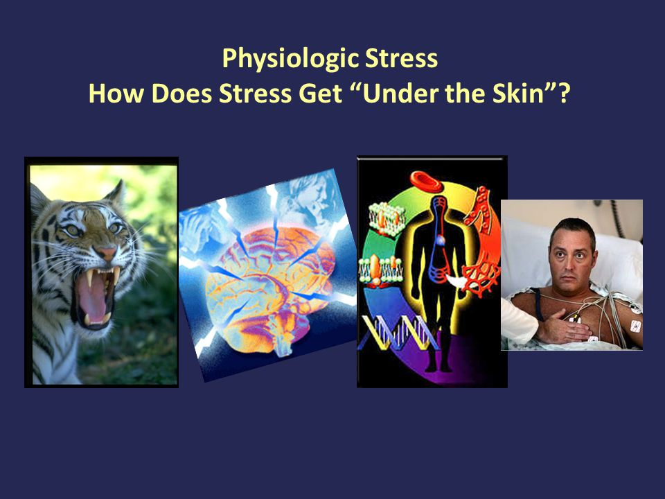 Physiologic Stress Response When the tiger enters the room, a cascade is initiated in the brain to manage the threat