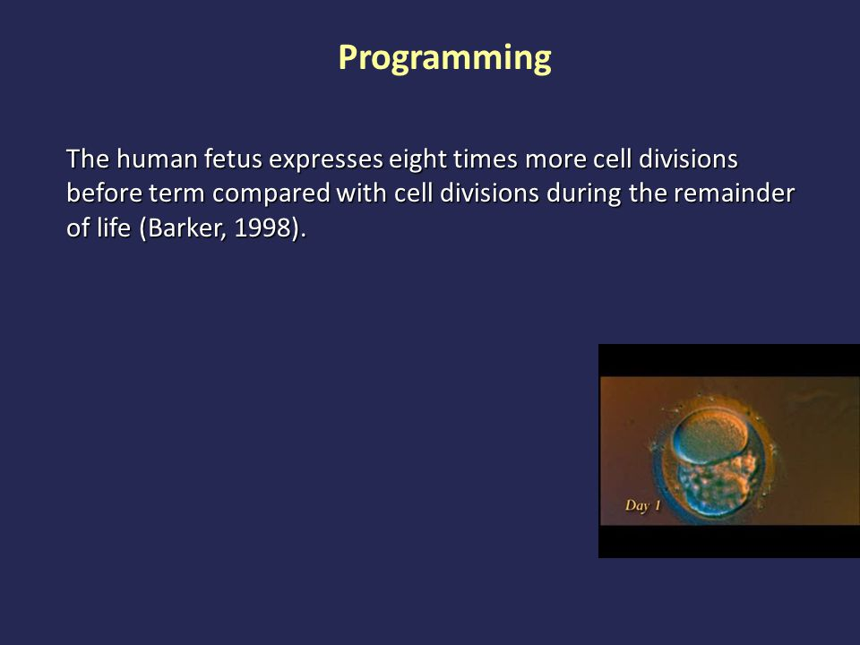 The human fetus expresses eight times more cell divisions before term compared with cell divisions during the remainder of life (Barker, 1998).