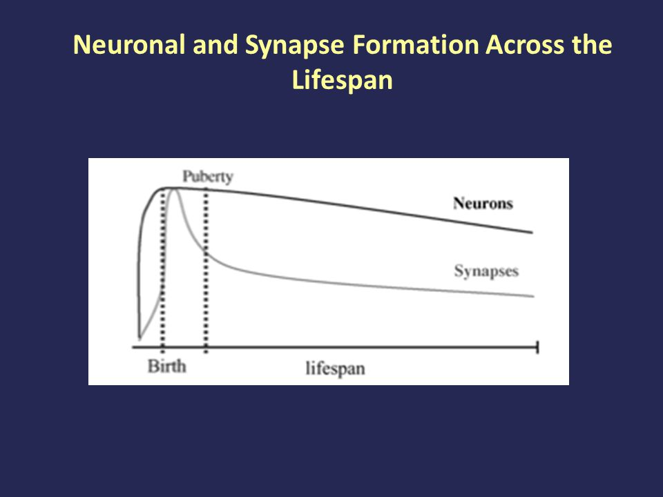 Neuronal and Synapse Formation Across the Lifespan