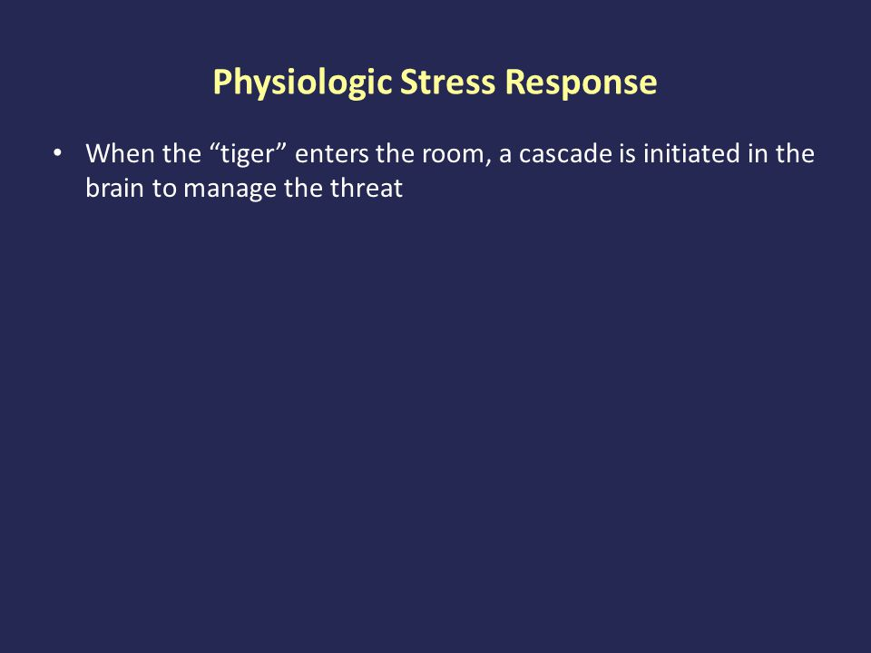 Physiologic Stress Response When the tiger enters the room, a cascade is initiated in the brain to manage the threat At least for humans, the tiger can be just thinking about having to do something threatening – imagining an anticipated or experienced conflict – preparing to perform in public – Preparing to enter a new environment