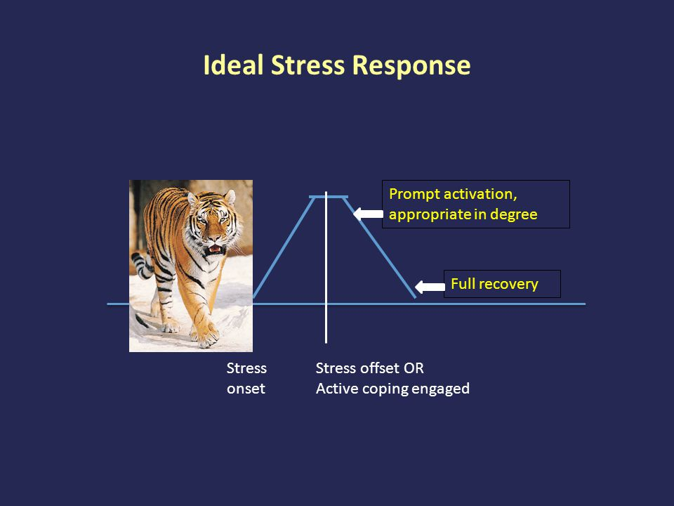 Stress as Allostasis & Allostatic Load Concept introduced by Sterling & Ewer, 1988; Developed and expanded by Bruce McEwen Reconceptualizes stress as an issue of balance