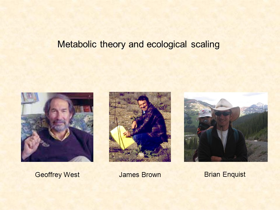 Metabolic theory and ecological scaling Geoffrey WestJames Brown Brian Enquist