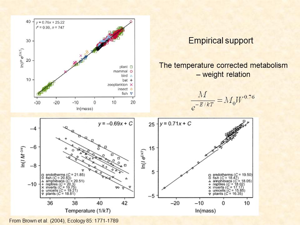 Empirical support The temperature corrected metabolism – weight relation From Brown et al.