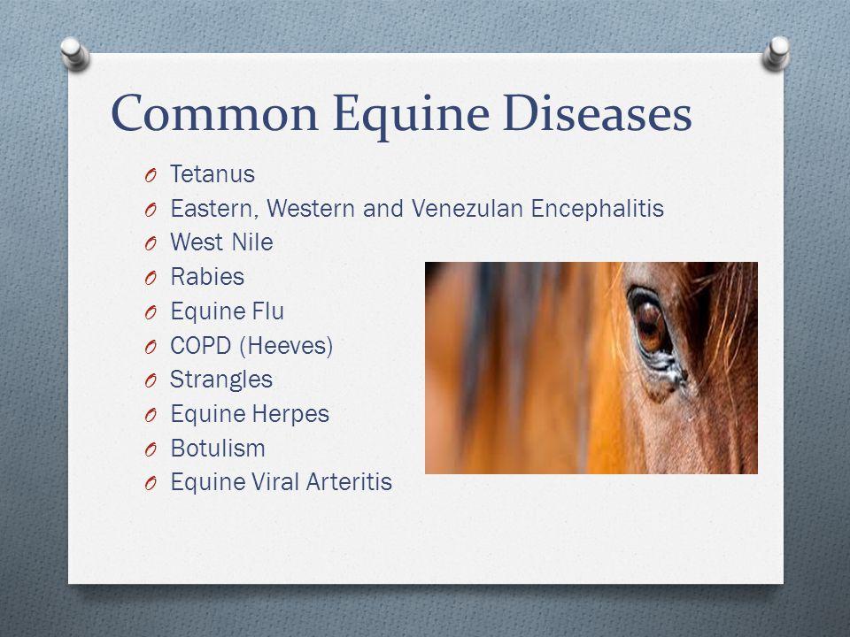 Common Equine Diseases O Tetanus O Eastern, Western and Venezulan Encephalitis O West Nile O Rabies O Equine Flu O COPD (Heeves) O Strangles O Equine Herpes O Botulism O Equine Viral Arteritis