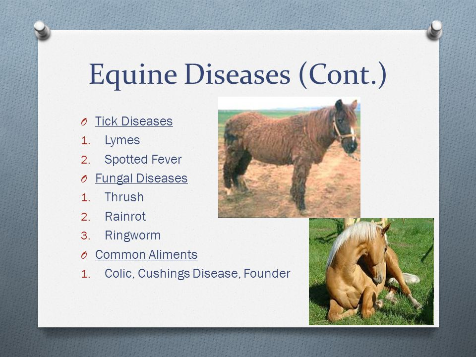 Equine Diseases (Cont.) O Tick Diseases 1.Lymes 2.
