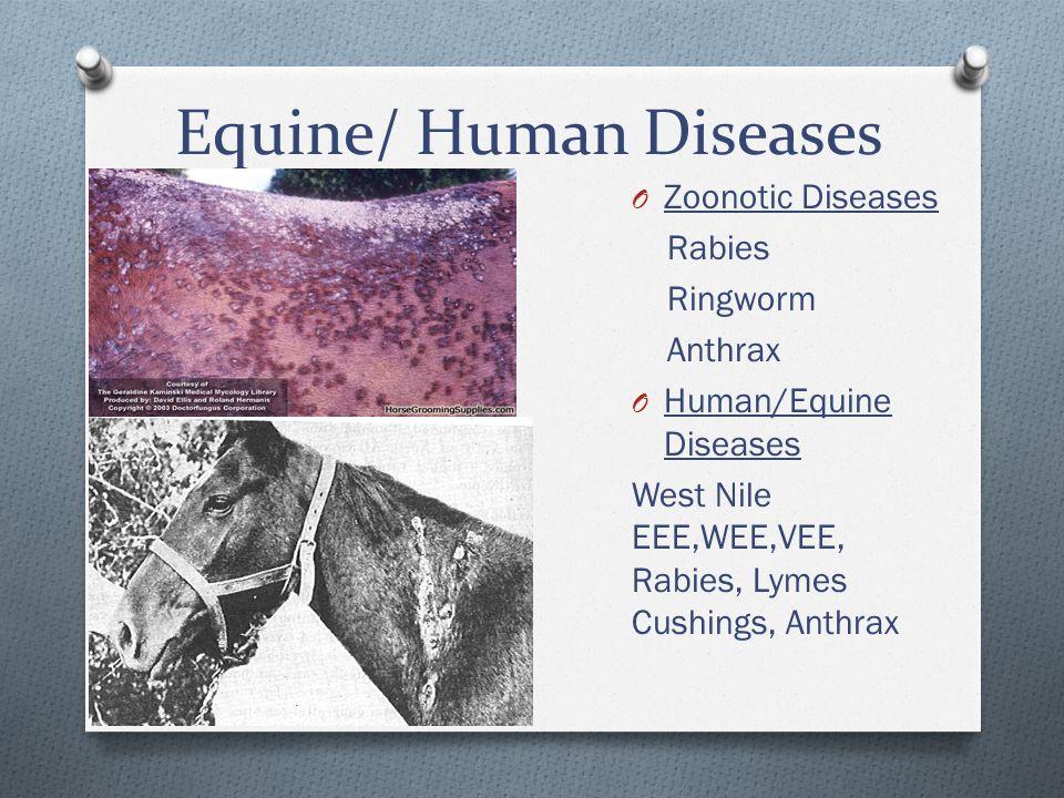 Equine/ Human Diseases O Zoonotic Diseases Rabies Ringworm Anthrax O Human/Equine Diseases West Nile EEE,WEE,VEE, Rabies, Lymes Cushings, Anthrax