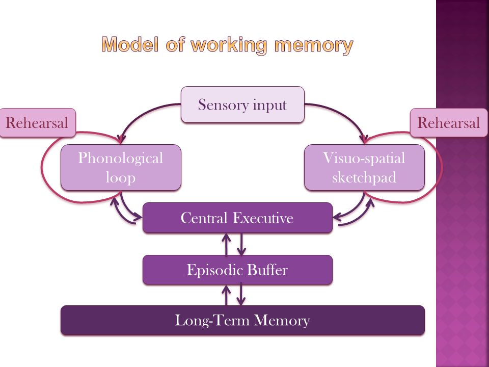 Sensory input Phonological loop Visuo-spatial sketchpad Central Executive Episodic Buffer Long-Term Memory Rehearsal