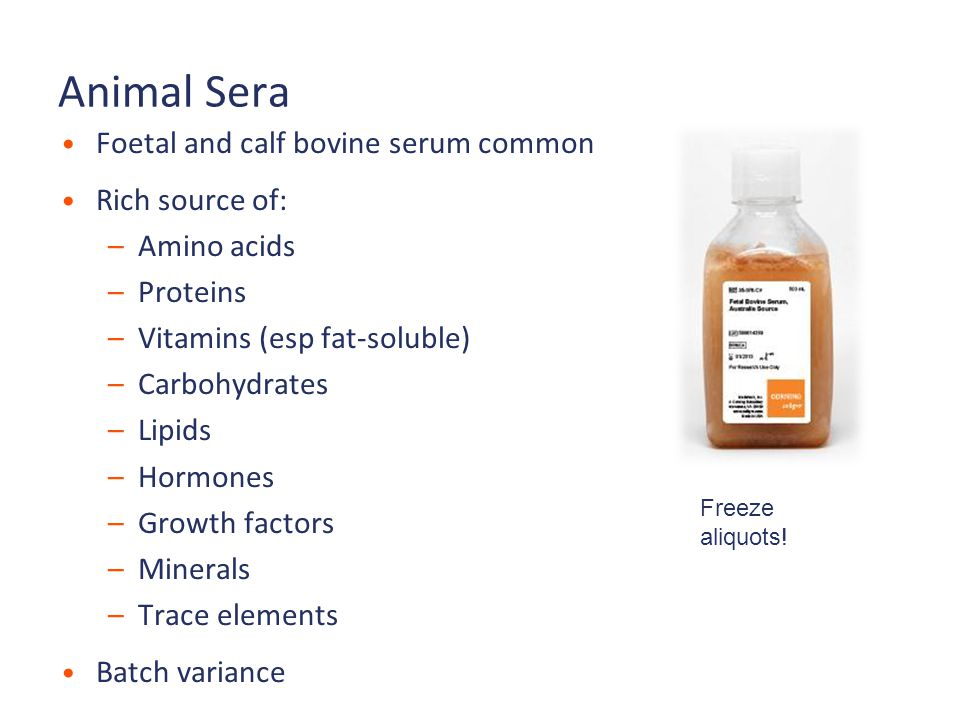 Animal Sera Foetal and calf bovine serum common Rich source of: –Amino acids –Proteins –Vitamins (esp fat-soluble) –Carbohydrates –Lipids –Hormones –Growth factors –Minerals –Trace elements Batch variance Freeze aliquots!