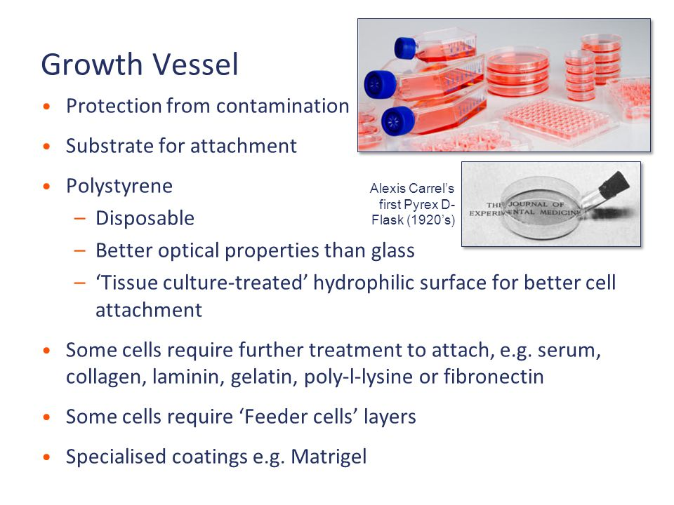 Growth Vessel Protection from contamination Substrate for attachment Polystyrene –Disposable –Better optical properties than glass –'Tissue culture-treated' hydrophilic surface for better cell attachment Some cells require further treatment to attach, e.g.