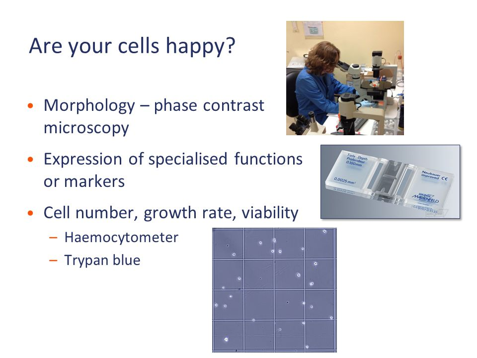 Are your cells happy.