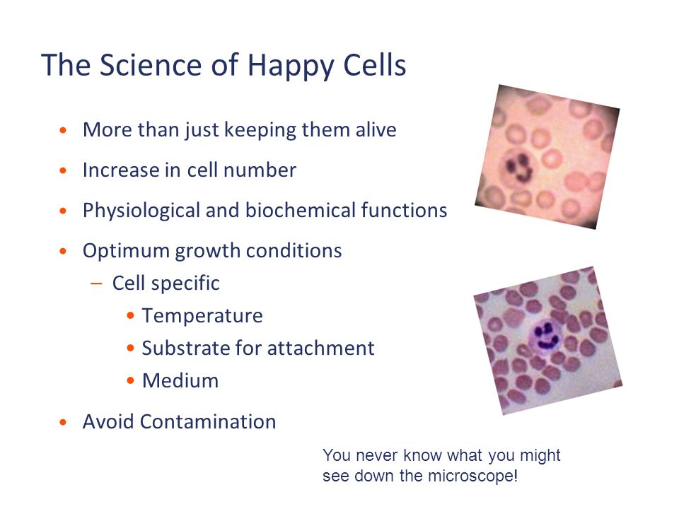 The Science of Happy Cells More than just keeping them alive Increase in cell number Physiological and biochemical functions Optimum growth conditions –Cell specific Temperature Substrate for attachment Medium Avoid Contamination You never know what you might see down the microscope!
