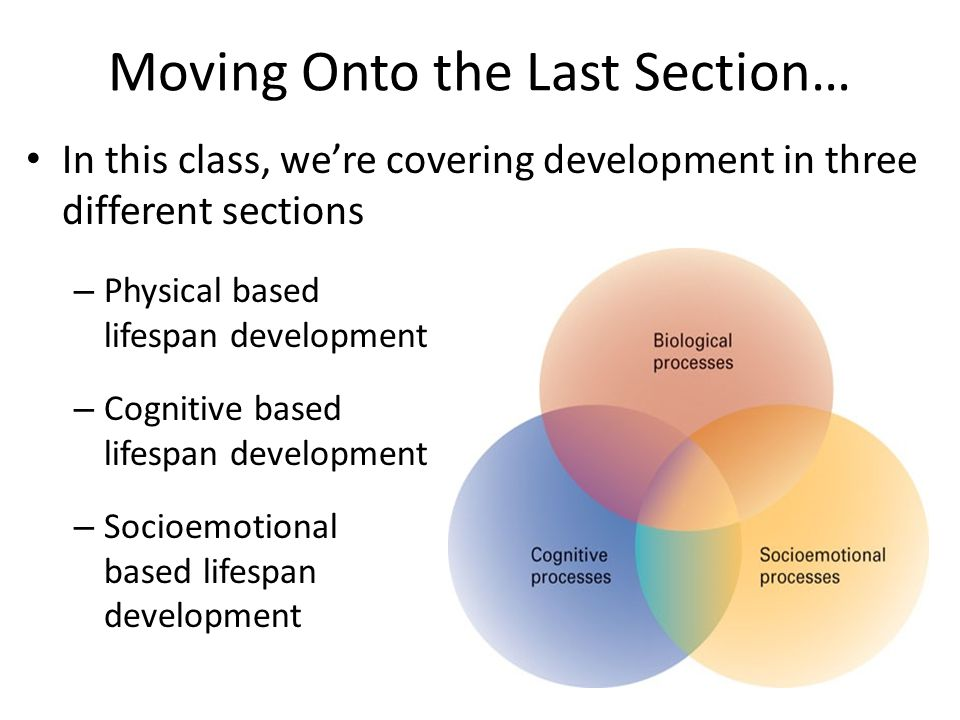 Moving Onto the Last Section… In this class, we're covering development in three different sections – Physical based lifespan development – Cognitive based lifespan development – Socioemotional based lifespan development