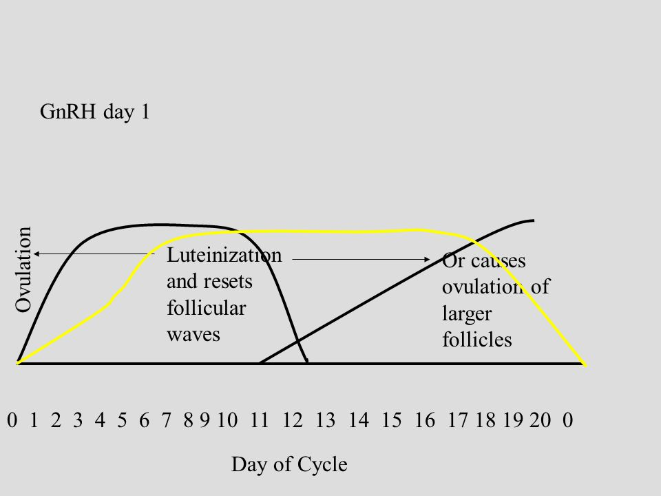 0 1 2 3 4 5 6 7 8 9 10 11 12 13 14 15 16 17 18 19 20 0 Day of Cycle GnRH day 1 Luteinization and resets follicular waves Ovulation Or causes ovulation of larger follicles