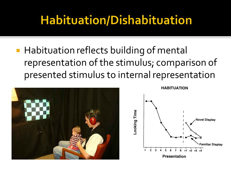  Habituation reflects building of mental representation of the stimulus; comparison of presented stimulus to internal representation