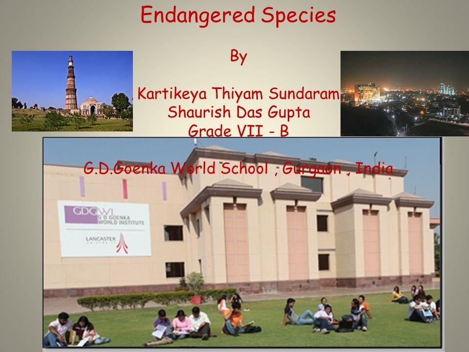 Endangered Species By Kartikeya Thiyam Sundaram Shaurish Das Gupta Grade VII - B G.D.Goenka World School, Gurgaon, India