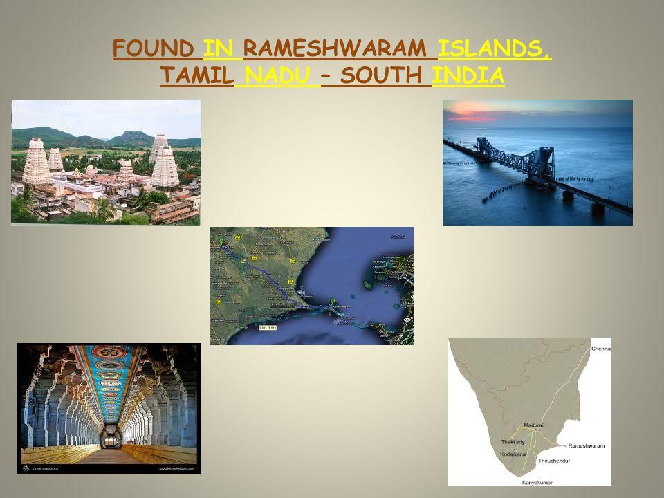 FOUND IN RAMESHWARAM ISLANDS, TAMIL NADU – SOUTH INDIA