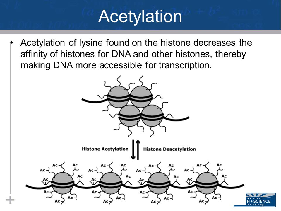Acetylation Acetylation of lysine found on the histone decreases the affinity of histones for DNA and other histones, thereby making DNA more accessible for transcription.