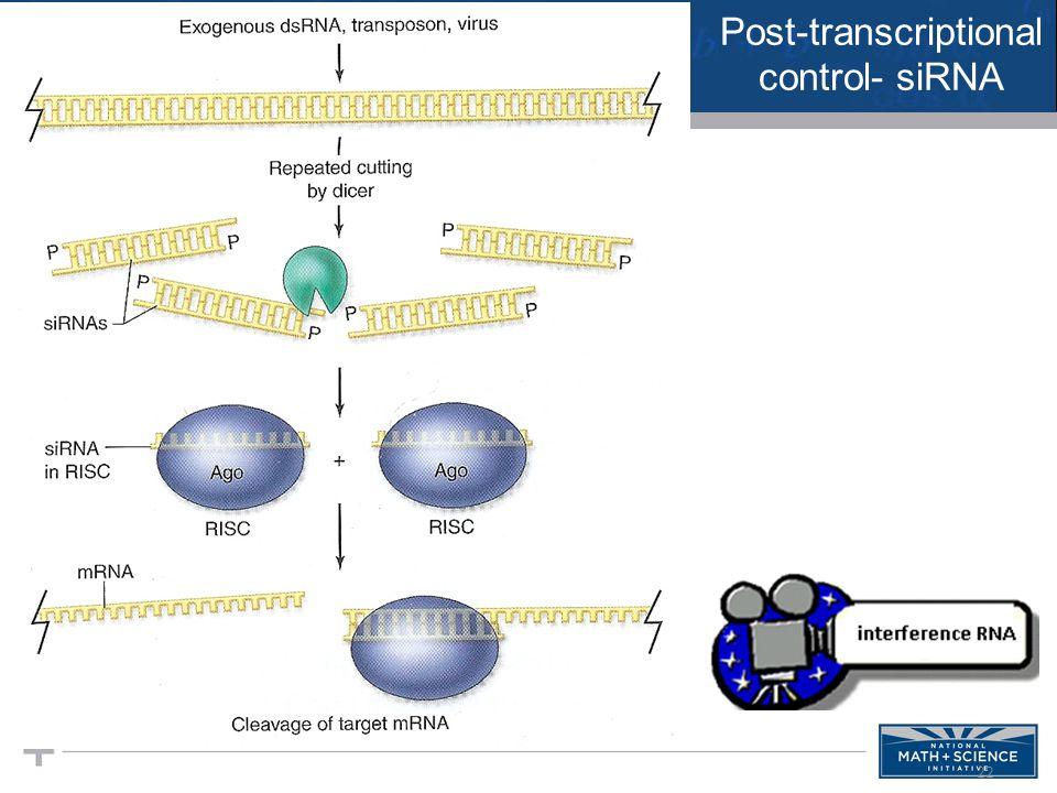 22 Post-transcriptional control- siRNA